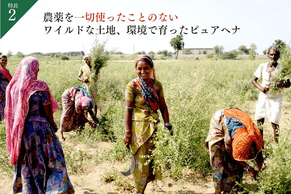 特長2.農薬を一切使ったことのないワイルドな土地、環境で育ったピュアヘナ