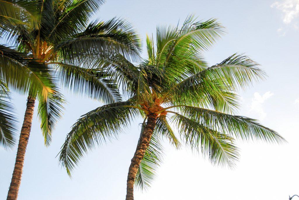 椰子由来の合成界面活性剤